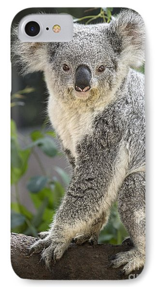 Female Koala IPhone Case by Jamie Pham
