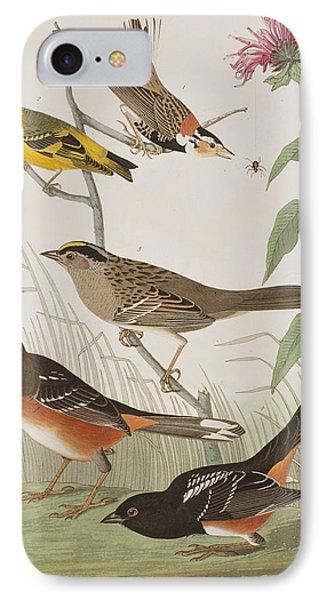 Finches IPhone Case by John James Audubon