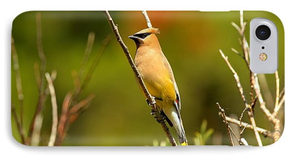 Fishercap Cedar Waxwing IPhone Case by Adam Jewell