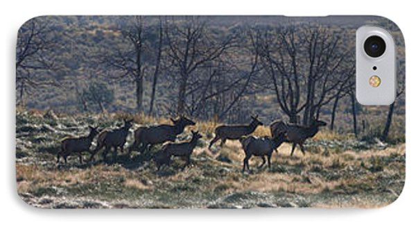 Follow The Leader - Elk In Rut IPhone Case by Mark Kiver