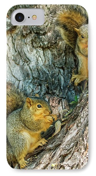 Fox Squirrels IPhone Case by Robert Bales