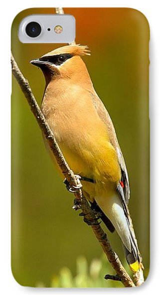 Glacier Cedar Waxwing IPhone Case by Adam Jewell