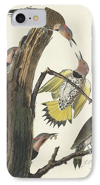 Gold-winged Woodpecker IPhone Case by John James Audubon
