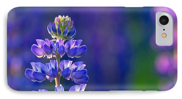 Golden Hour Lupine IPhone Case by Mary Amerman