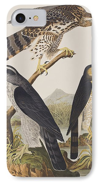 Goshawk And Stanley Hawk IPhone Case by John James Audubon