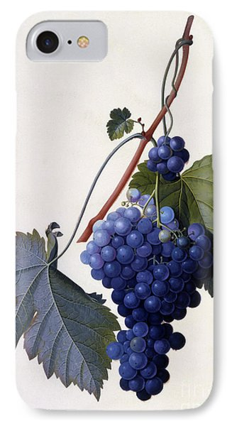 Grapes IPhone Case by Georg Dionysius Ehret