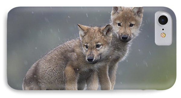 Gray Wolf Canis Lupus Pups In Light IPhone Case by Tim Fitzharris
