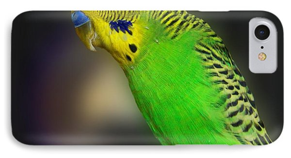 Green Parakeet Portrait IPhone Case by Jai Johnson