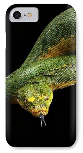 Green Tree Python. Morelia Viridis. Isolated Black Background IPhone Case by Sergey Taran