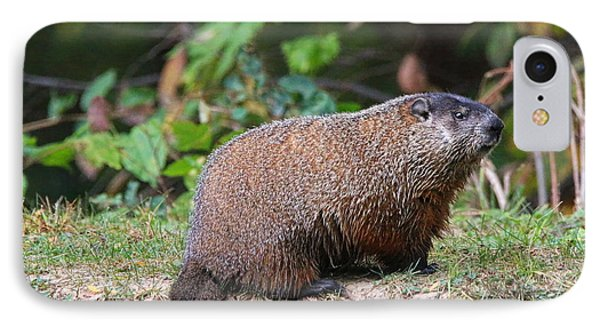 Groundhog  0590 IPhone Case by Jack Schultz