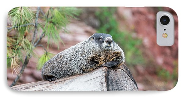 Groundhog On A Log IPhone Case by Jess Kraft