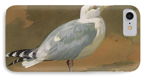Gull IPhone Case by Archibald Thorburn