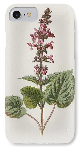 Hedge Stachys IPhone Case by Frederick Edward Hulme
