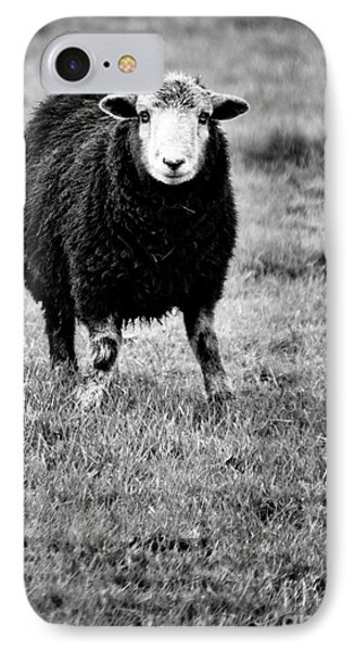 Herdwick Sheep Phone Case by Meirion Matthias