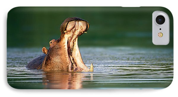 Hippopotamus IPhone Case by Johan Swanepoel