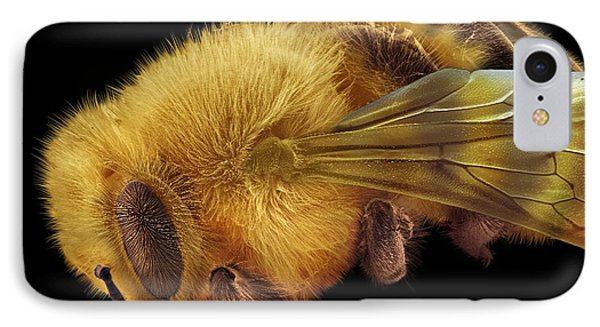 Honey Bee, Sem Phone Case by David Mccarthy
