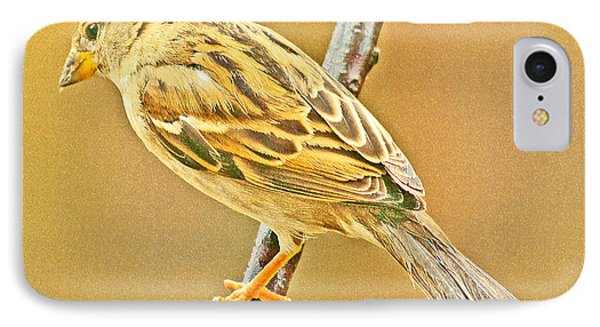 IPhone Case featuring the photograph House Sparrow by A Gurmankin