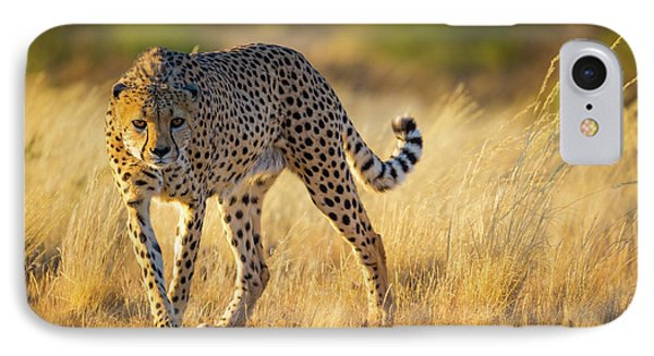 Hunting Cheetah IPhone 7 Case by Inge Johnsson