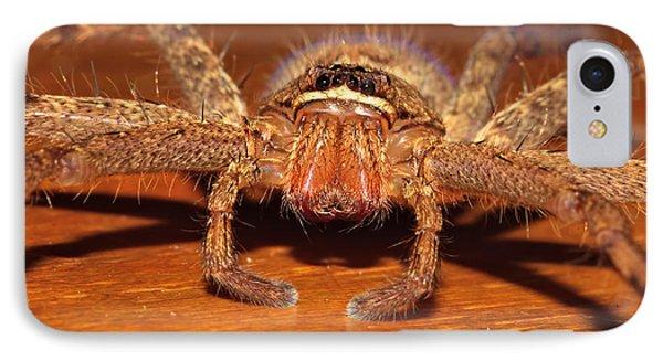 Huntsman Spider Phone Case by Joerg Lingnau