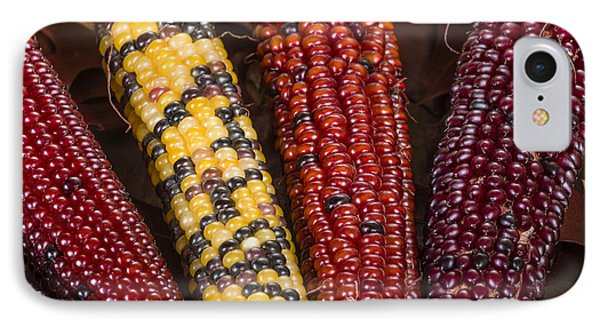 Indian Corn Colorful For Decoration IPhone Case by John Trax