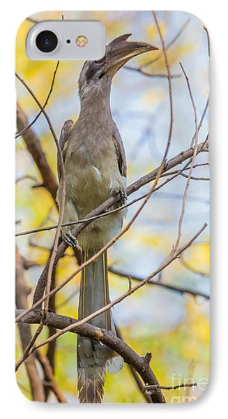 Indian Grey Hornbill IPhone Case by B. G. Thomson