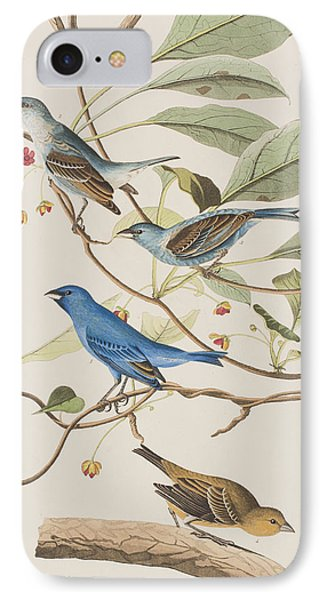 Indigo Bird IPhone Case by John James Audubon