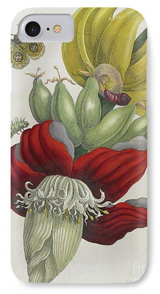 Inflorescence Of Banana, 1705 IPhone Case by Maria Sibylla Graff Merian