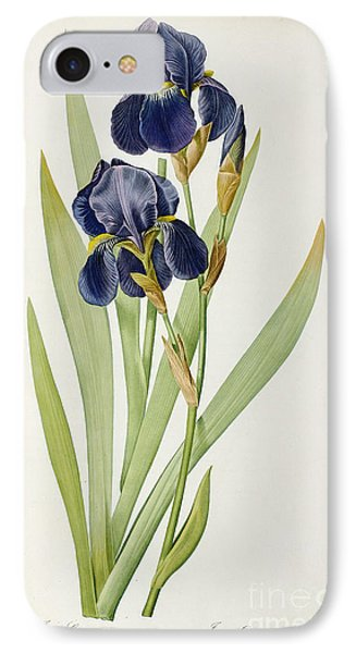 Iris Germanica IPhone Case by Pierre Joseph Redoute