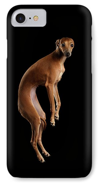 Italian Greyhound Dog Jumping, Hangs In Air, Looking Camera Isolated IPhone Case by Sergey Taran