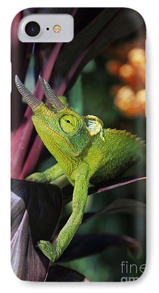 Jacksons Chameleon On Leaf Phone Case by Dave Fleetham - Printscapes