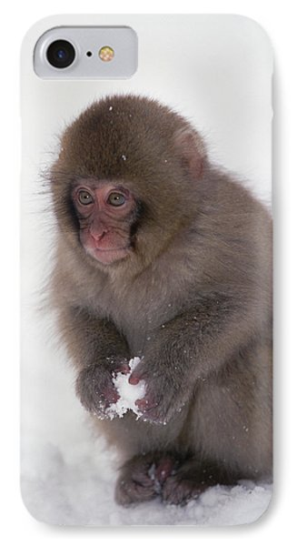 Japanese Macaque Macaca Fuscata Baby IPhone Case by Konrad Wothe