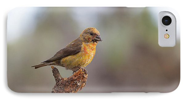 Juvenile Male Red Crossbill IPhone 7 Case by Doug Lloyd