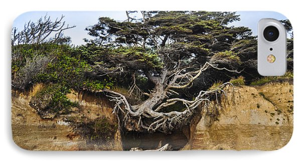 Kalaloch Hanging Tree IPhone Case by Pelo Blanco Photo