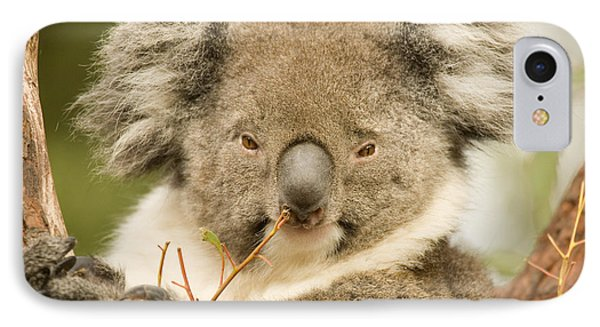 Koala Snack IPhone Case by Mike  Dawson