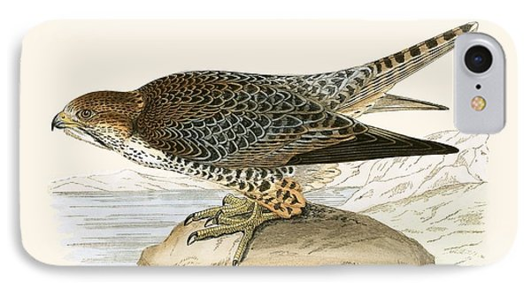 Lanner Falcon IPhone Case by English School