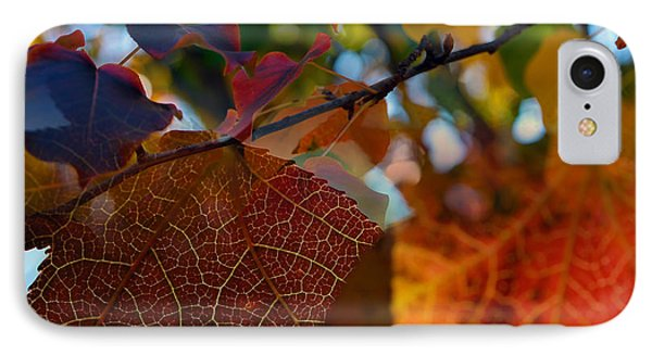 Late Autumn Colors Phone Case by Stephen Anderson