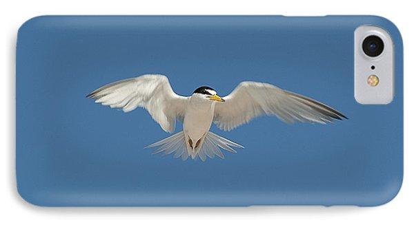 Least Tern 2 Phone Case by Kenneth Albin