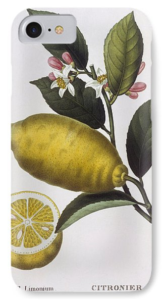 Lemon IPhone Case by Pancrace Bessa