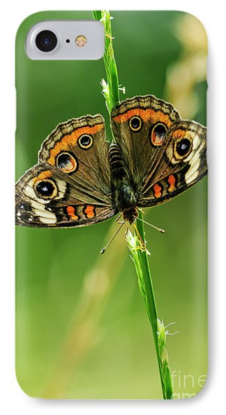 Lepidoptera Phone Case by Charles Dobbs