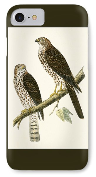 Levant Sparrow Hawk IPhone Case by English School