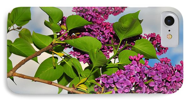 Lilacs Phone Case by Catherine Reusch  Daley