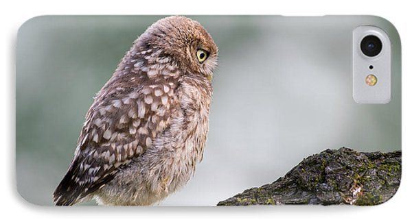 Little Owl Chick Practising Hunting Skills IPhone 7 Case by Roeselien Raimond