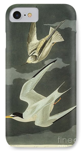 Little Tern IPhone Case by John James Audubon