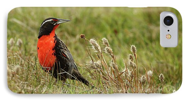 Long-tailed Meadowlark IPhone 7 Case by Bruce J Robinson