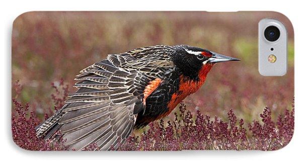 Long-tailed Meadowlark IPhone Case by Jean-Louis Klein & Marie-Luce Hubert