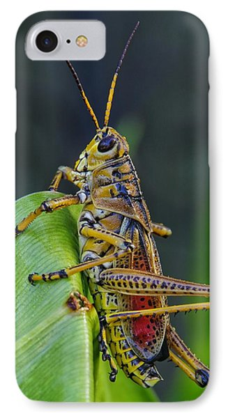 Lubber Grasshopper IPhone Case by Richard Rizzo