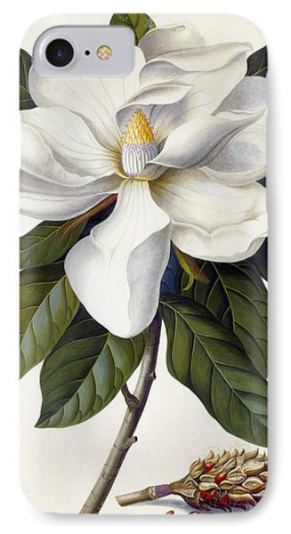 Magnolia Grandiflora IPhone Case by Georg Dionysius Ehret