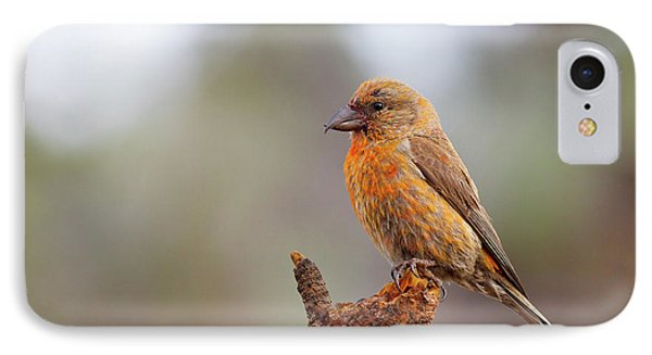 Male Red Crossbill IPhone Case by Doug Lloyd
