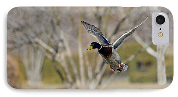 Mallard Approach Phone Case by Mike  Dawson