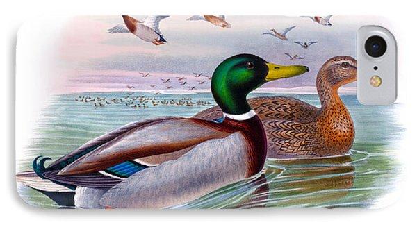 Mallard Or Wild Duck Antique Bird Print Joseph Wolf Birds Of Great Britain  IPhone Case by Joseph Wolf - HC Richter